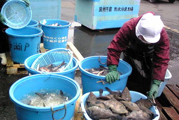100217_鮮魚1.jpg