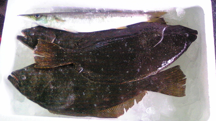 100607_魚1.jpg