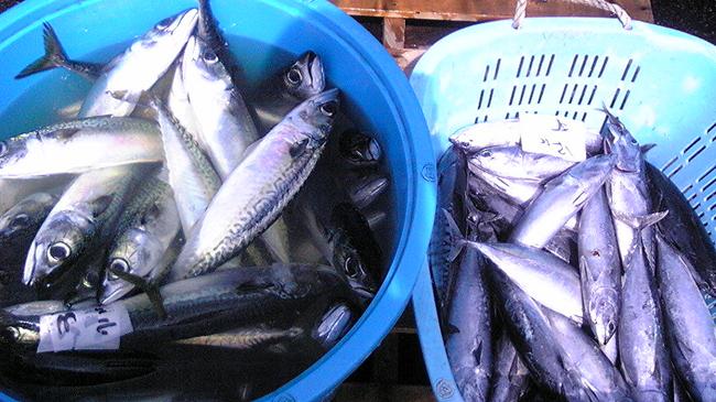 100710_鮮魚1.jpg