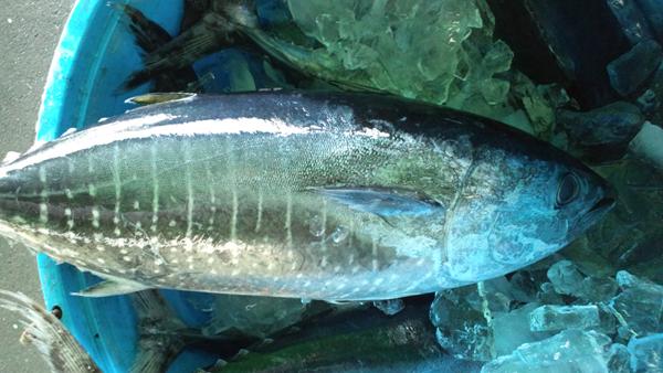110406_鮮魚1.jpg