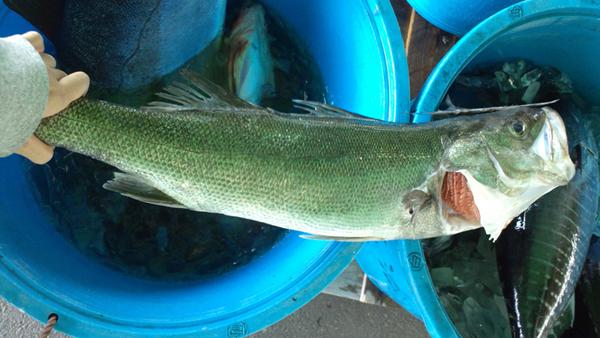 110406_鮮魚2.jpg