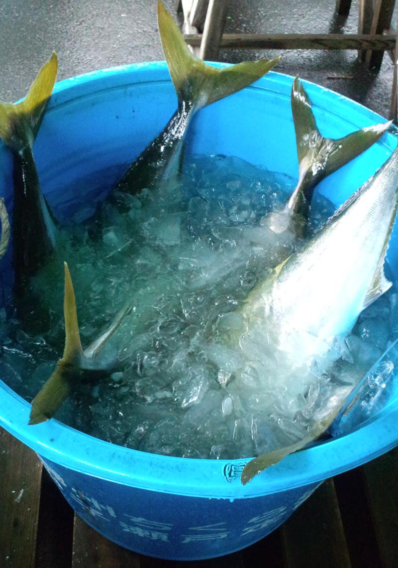 110416_鮮魚3.jpg