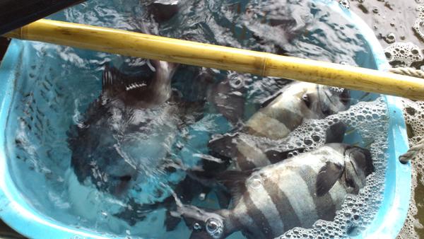 110418_鮮魚2.jpg