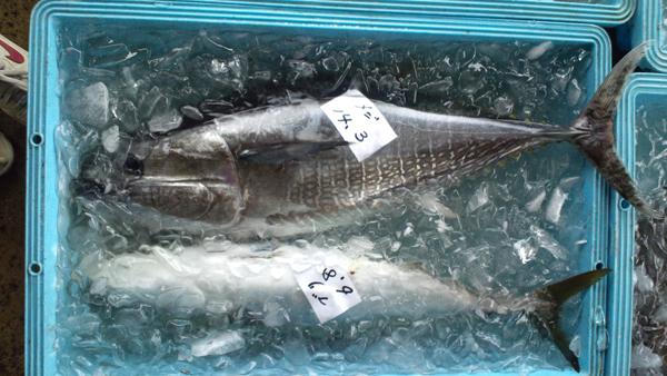 110418_鮮魚5.jpg