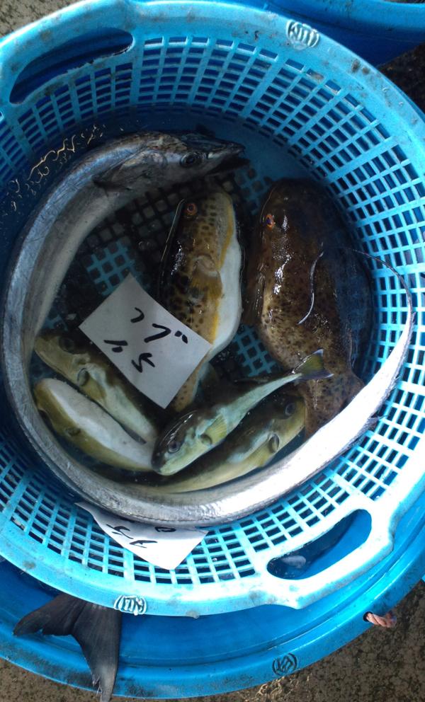 110418_鮮魚6.jpg