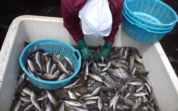 110422_鮮魚1.jpg