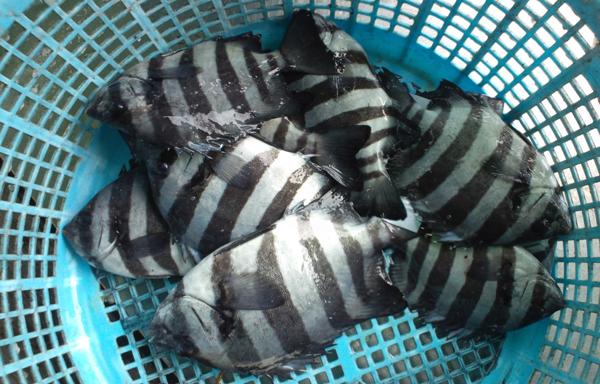 110422_鮮魚4.jpg