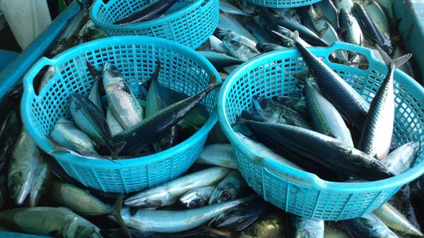 110429_鮮魚1.jpg