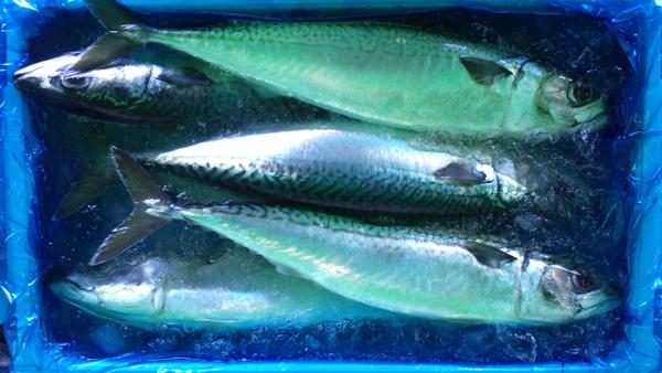 110429_鮮魚3.jpg