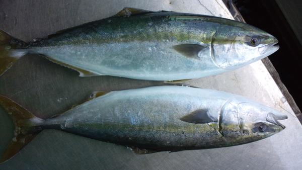 110429_鮮魚4.jpg
