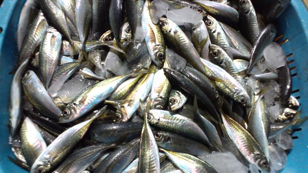 110502_鮮魚1.jpg