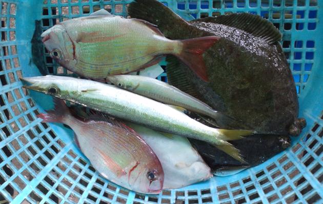 110502_鮮魚3.jpg