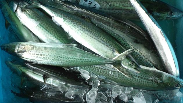 110514_鮮魚2.jpg