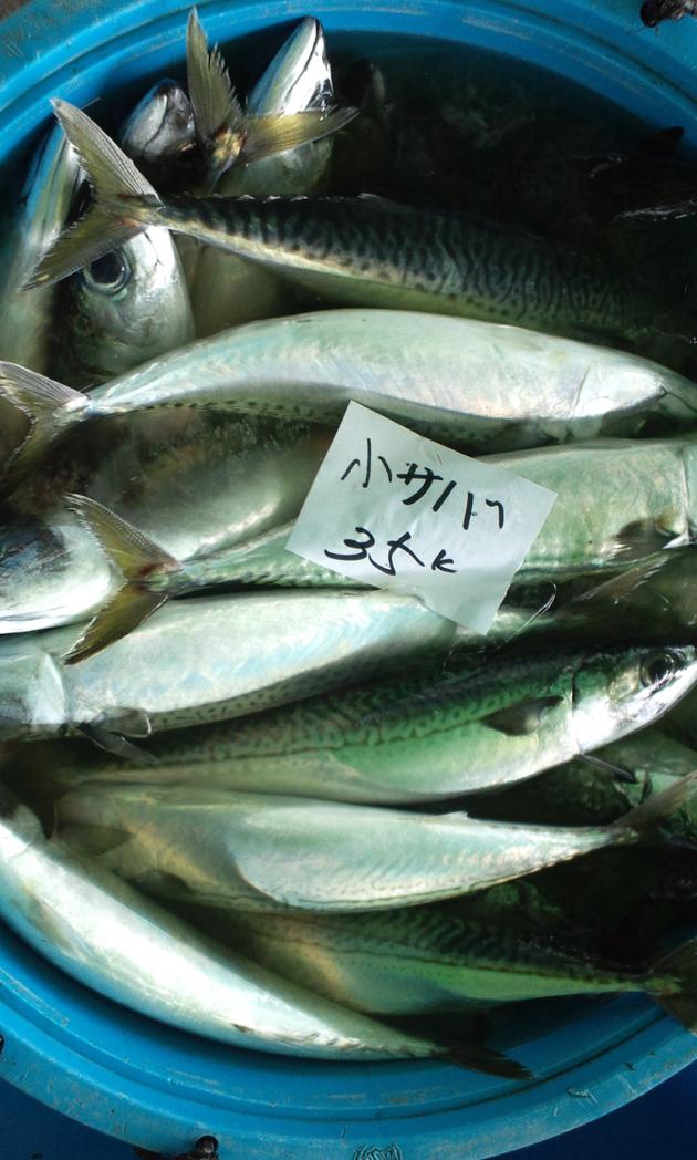 110514_鮮魚4.jpg