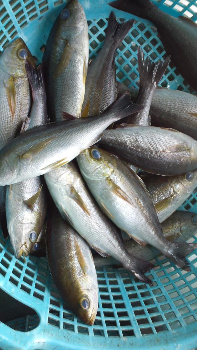 110514_鮮魚6.jpg