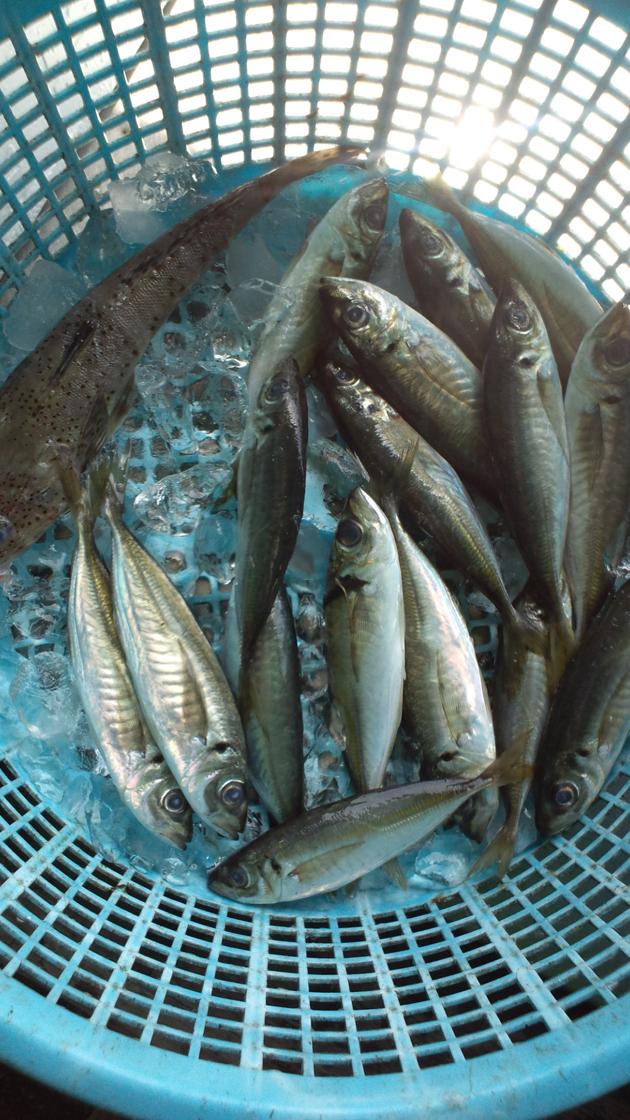 110514_鮮魚7.jpg