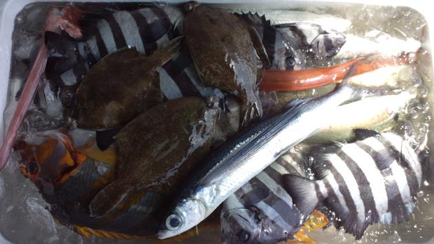 110514_鮮魚8.jpg