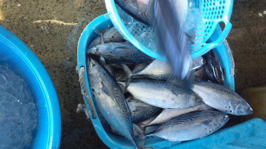 111205_鮮魚1.jpg