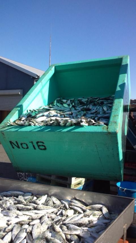 111205_鮮魚2.jpg