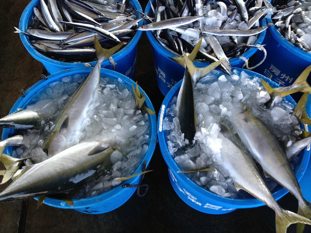 1120鮮魚4.JPG