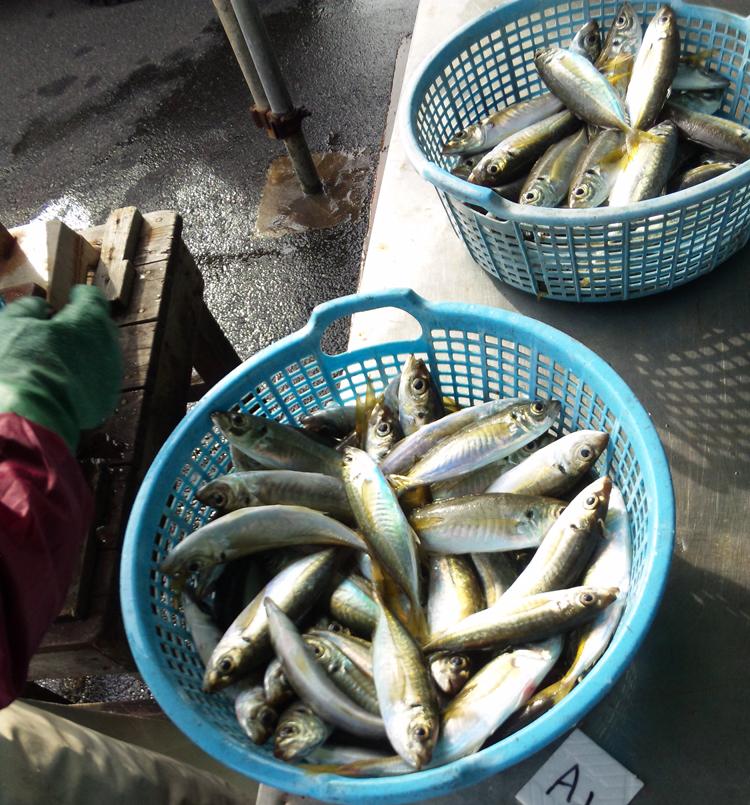 121129_鮮魚1.jpg