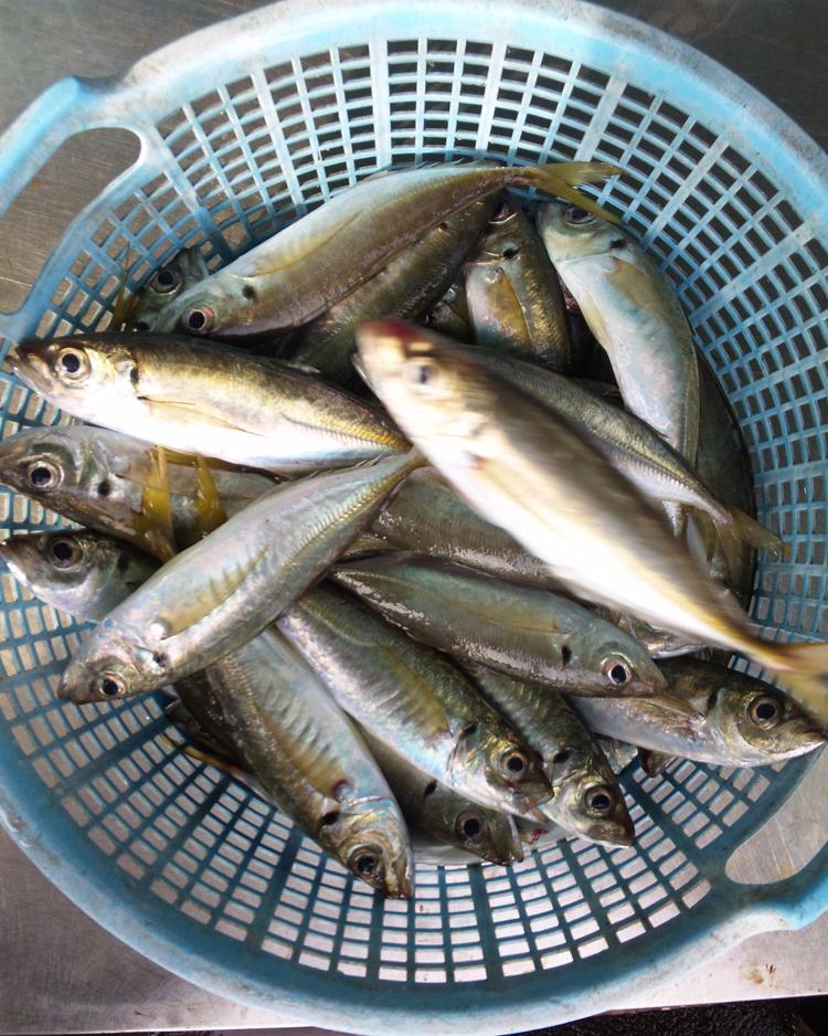 121129_鮮魚2.jpg