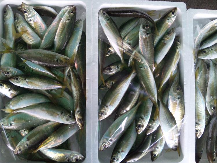 121129_鮮魚3.jpg