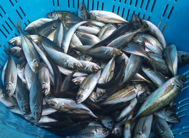 2010-10-14 鮮魚1.jpg