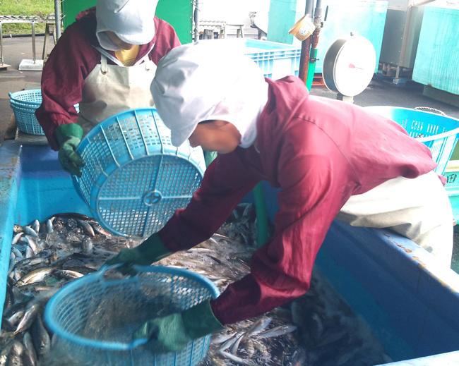 2010-10-14 鮮魚2.jpg