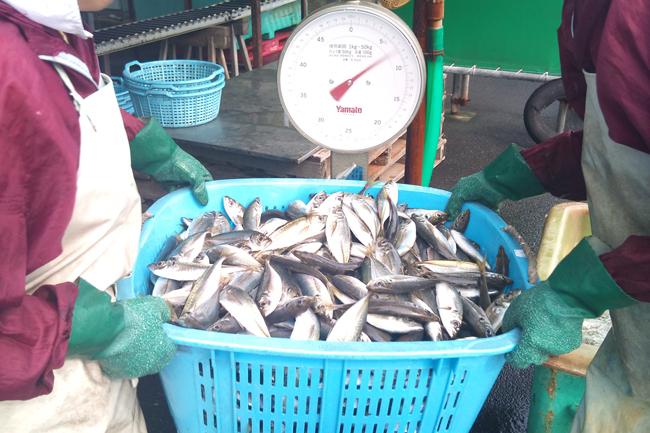 2010-10-14 鮮魚3.jpg