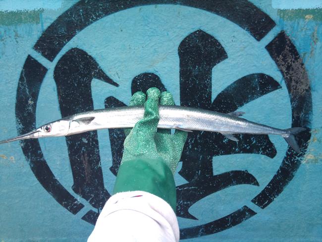 2010-10-14 鮮魚4.jpg