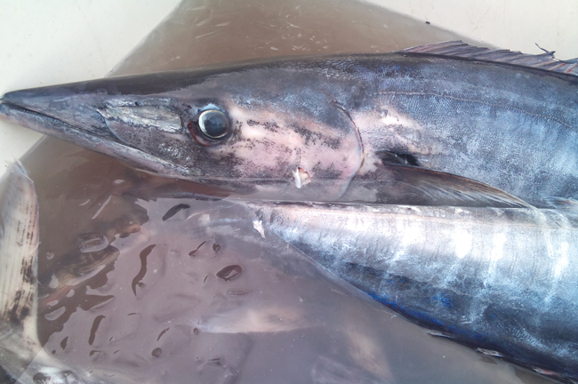 2010-10-14 鮮魚6.jpg
