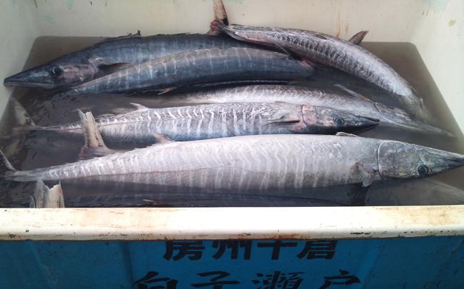2010-10-14 鮮魚7.jpg