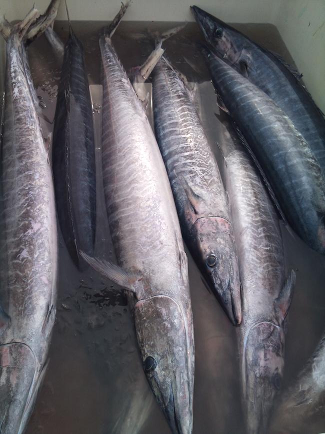 2010-10-14 鮮魚8.jpg