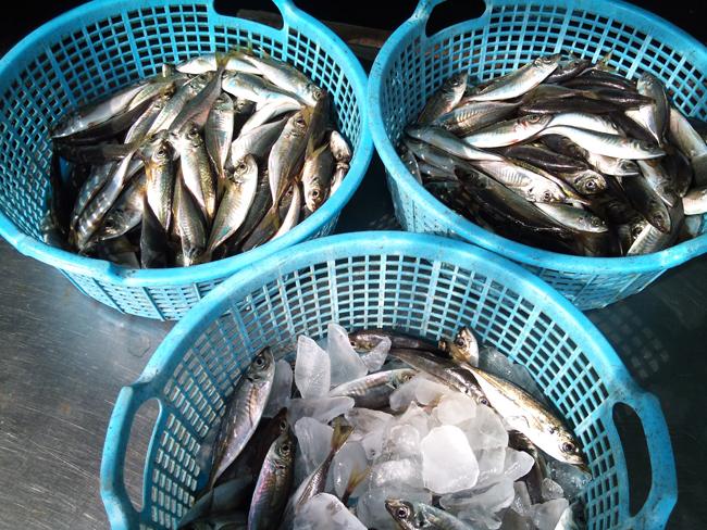 2010-10-26 鮮魚3.jpg