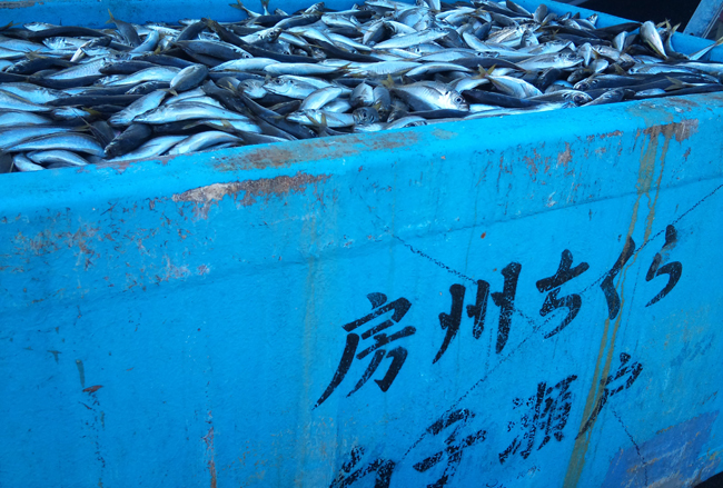 2010-11-05 鮮魚1.jpg