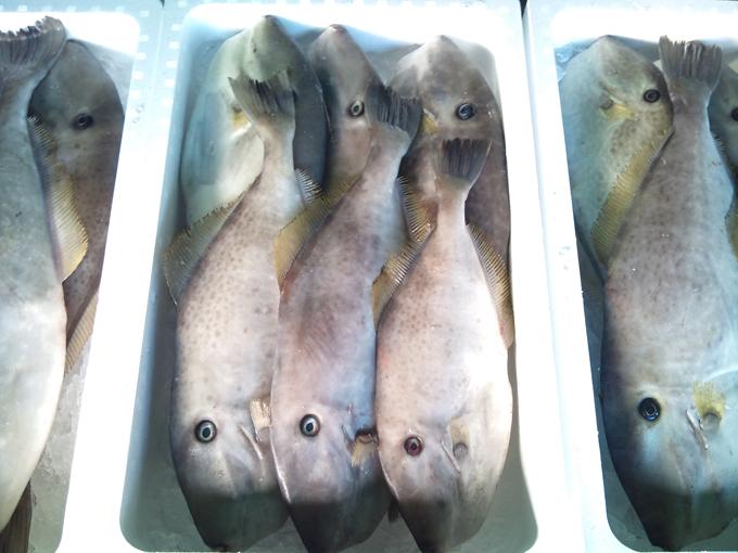 2010-12-15 鮮魚2.jpg
