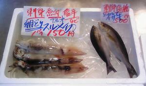 1,29 鮮魚1.jpg