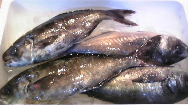 100304_鮮魚3.jpg