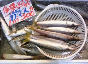 2,5 カマス鮮魚.jpg