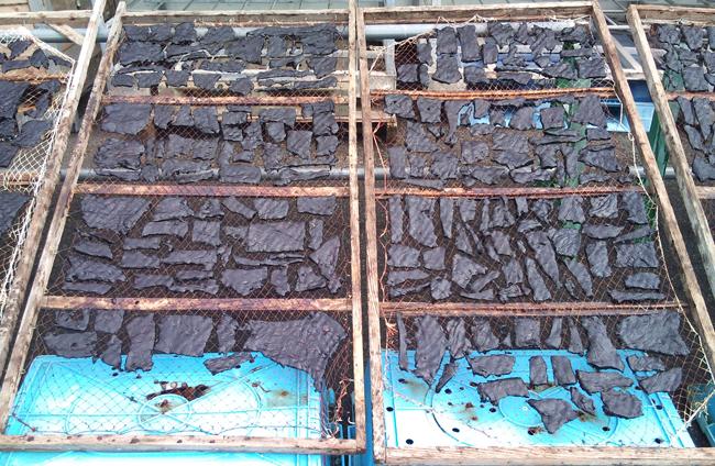 2010-10-13 鯨3.jpg