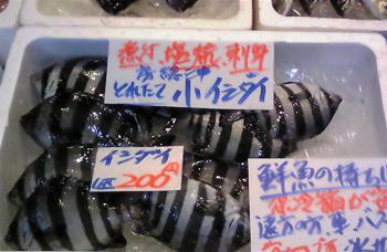 3,6 小石鯛.jpg